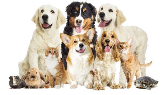 Mattawan Animal Hospital - Home